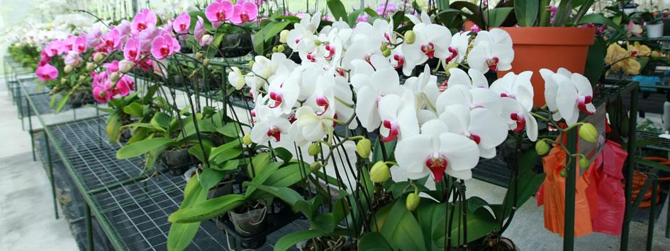 orchid-farm-genting